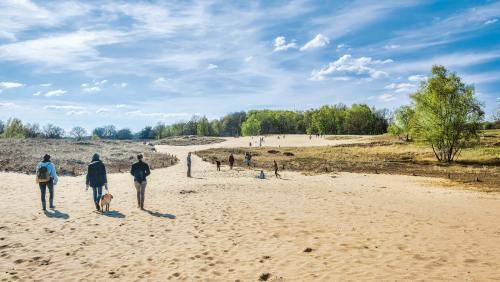 Hamburgs letzte Wanderdüne wird sowohl von Heidelandschaft als auch von Marschwiesen eingerahmt.
