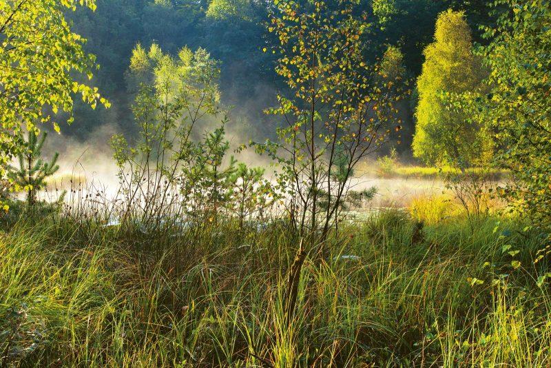 Wer mit offenen Augen durch den Wildpark spaziert, wird vielleicht auch eine der nachtaktiven Eulen erspähen.