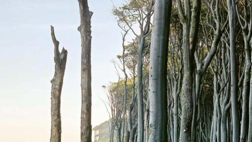 Der Riedensee, eine mit Wasser gefüllte Mulde, die von der Eiszeit geschaffen wurde.