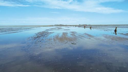 Bei einer geführten Wanderung lässt sich der Meeresboden gefahrlos erkunden.