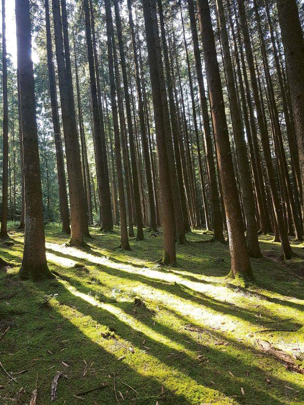Baumriesen, Moos, Pilze … In diesem Märchenwald könnten sich Hänsel und Gretel verlaufen haben.