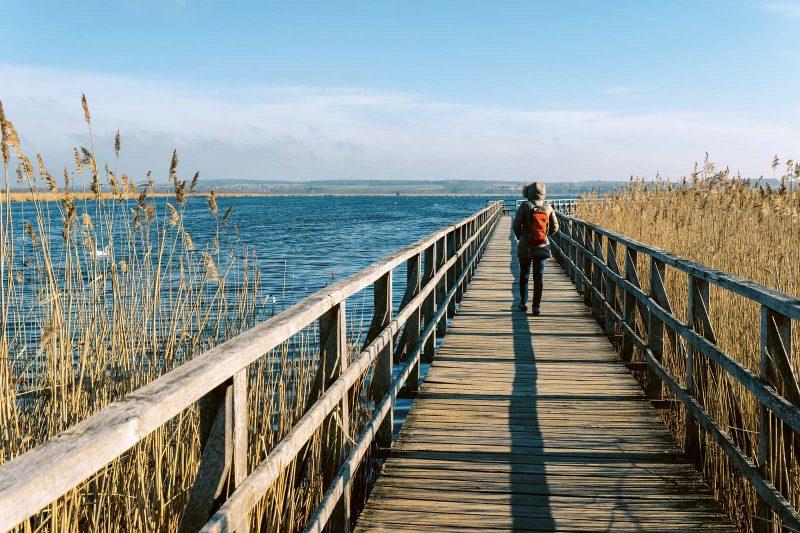 In diesem stillen Naturparadies am Federsee kann man dem stolzen Höckerschwan bei der Gefiederpflege zuschauen.