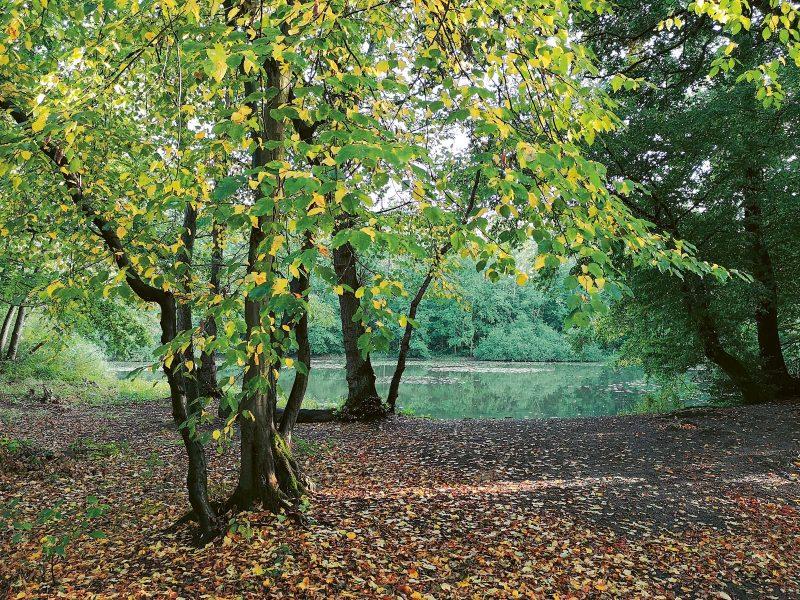 Die Wanderung von Quelle zu Quelle führt durch Wälder mit altem Baumbestand.