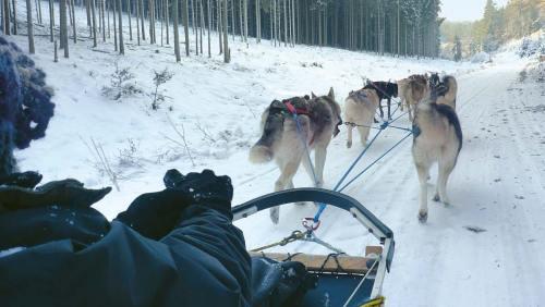 Schlittenhunde werden nicht zur Arbeit angetrieben, sie laufen gern und freiwillig.