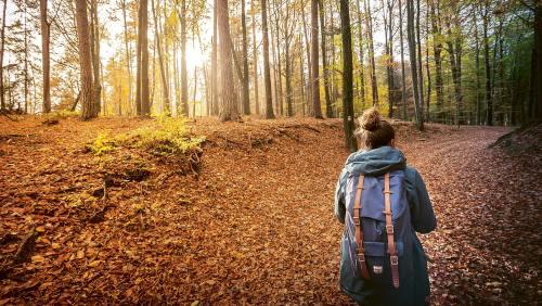 Mosel- und Saartal, besonders schön im bunten, raschelnden Herbstkleid