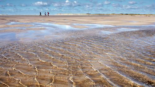Ständig in Bewegung: der Kniepsand, ein gigantisches Terrain für Strandläufer