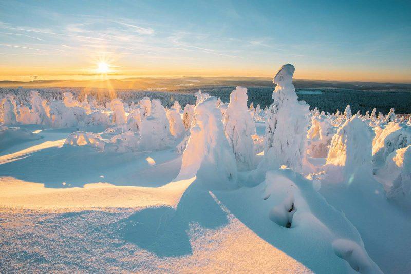 Wie verzauberte Wesen sehen die verzuckerten Bäume im Winter aus.