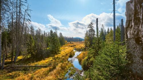 Nationalpark Harz: naturbelassen und von Menschenhand nahezu unberührt.