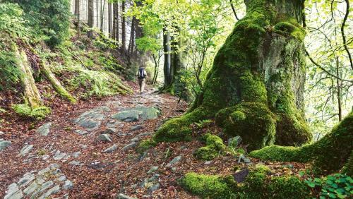 Im Nationalpark Eifel darf sich  die Natur völlig frei entfalten.