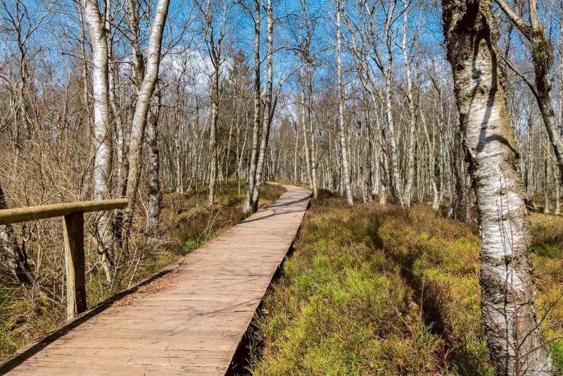 Ein Naturlehrpfad erläutert die Besonderheiten des fragilen Ökosystems.