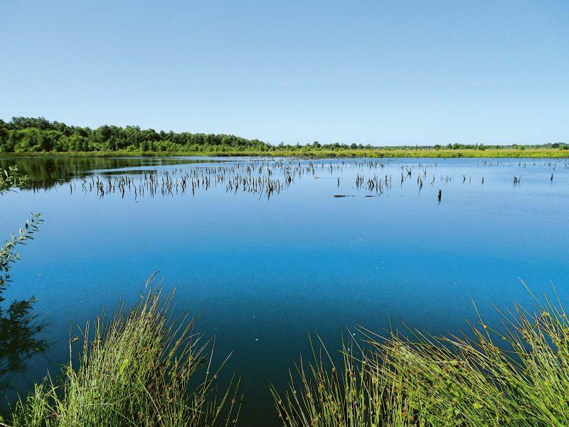 Das Himmelmoor: stiller Rückzugsort seltener Vogelarten, Insekten, Reptilien und Amphibien