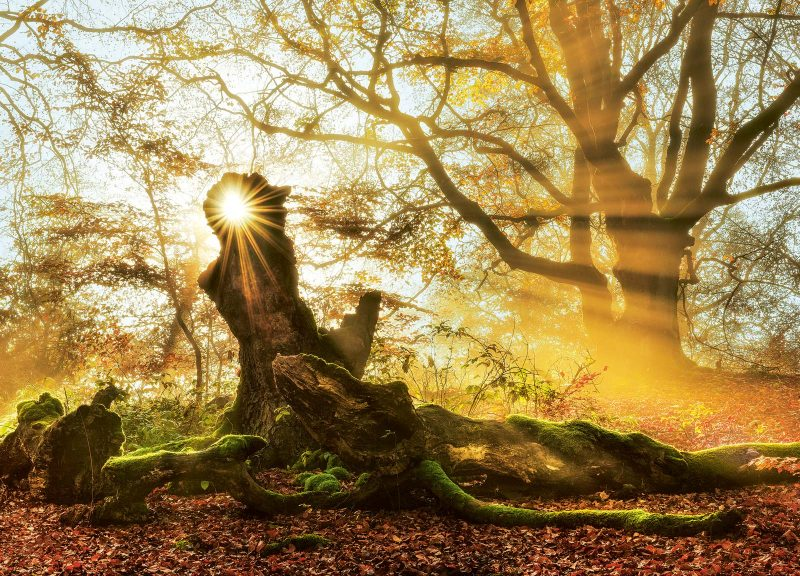 Im ersten Morgenlicht sehen Bäume, Wurzeln und bemooste Äste beinahe wie verzauberte Wesen aus.