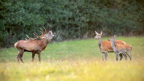Brunftzeit im Duvenstedter Brook: Im Herbst liefern  sich hier die männlichen Rivalen erbitterte Kämpfe.