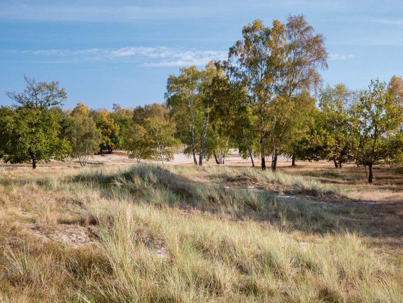 Heidelandschaft und Sanddünen wechseln sich im Naturschutzgebiet Boberger Niederung ab.