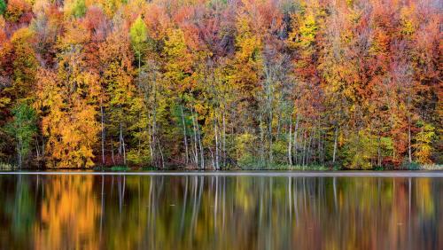 Herbst am Großensee: Die Baumwelt hat sich in Schale geworfen und betrachtet zufrieden ihr Spiegelbild im Wasser.
