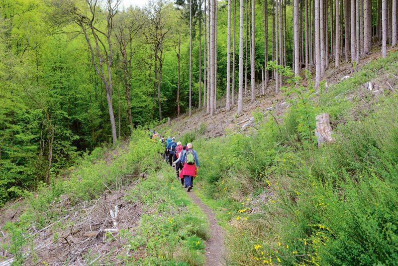 Der Naturpark Hohes Venn–Eifel:  ein Wanderparadies für Jung und Alt