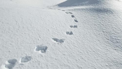 Die Spuren verraten, wer da durch den frischen Schnee gestapft ist.