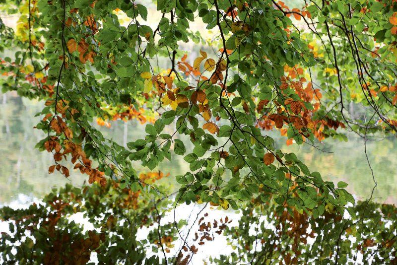 Der Herbst hält Einzug am Schaalsee: Jeden Tag verfärben sich die Blätter ein wenig mehr.
