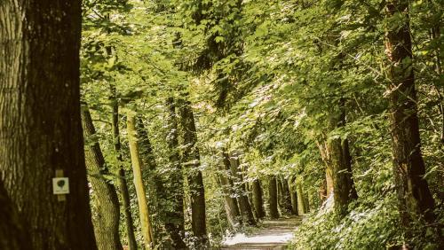 Ein verwunschenes Stück Natur: der DonAUwald in Bayerisch-Schwaben