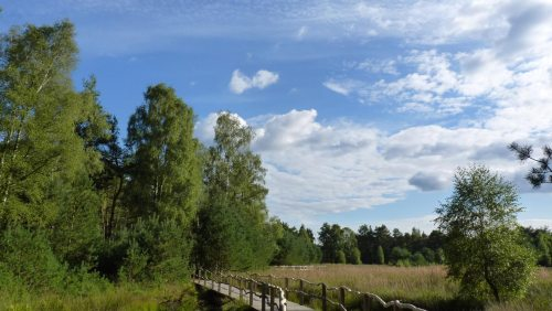 Wandern auf den Bohlenstegen des Nordpfad Dör´t Moor