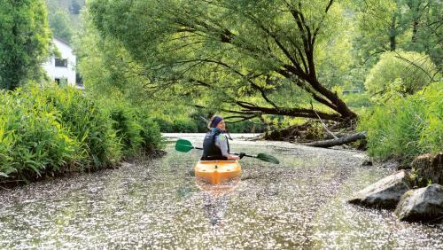 Es ist Frühsommer auf der Altmühl. Das Wasser getupft mit weißen Blütenblättern.