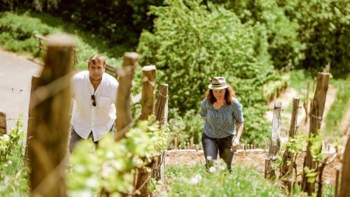 Ein 5km langer Wanderweg bei Iphofen widmet sich dem Genießerthema Wein.